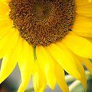 Sunflower by Sunshinesmile83