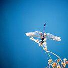 Blue Wonder by Sunshinesmile83