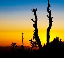 Sunset Silhouette by Joe Thill