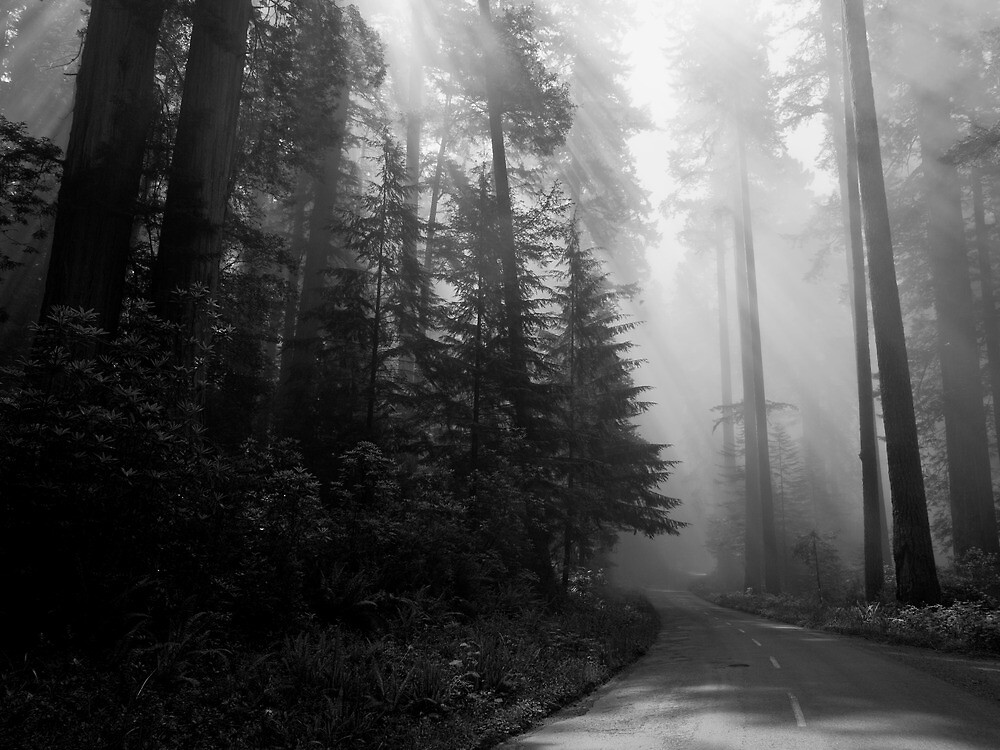 The Road to the Giants by JThill