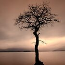 One tree... many moods by David Mould