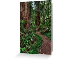 Redwood National Park - Tall Tree Grove Trail Greeting Card
