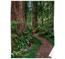 Redwood National Park - Tall Tree Grove Trail Poster