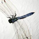 Dragonfly Suspension by Sunshinesmile83