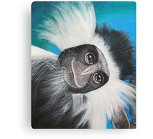 Colobus Monkey -  'Jungle Animals'  Canvas Print