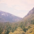 Yosemite forest by vvinicius