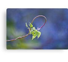 the loop of life Canvas Print