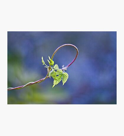 the loop of life Photographic Print