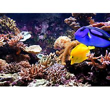 Tropical Fish on the Reef Photographic Print