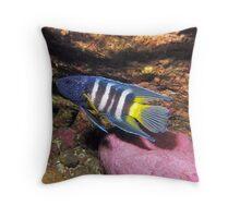 Eastern Blue Devilfish Throw Pillow