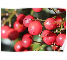 Berry tree Poster