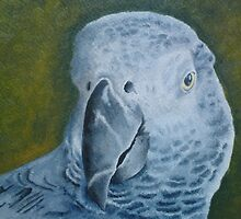 Gucci the African Grey by Ian Morton