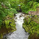 The Creek in Ketchikan by Barbara  Brown