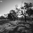 Durong Bushland by Penny Kittel