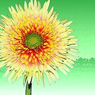 Gerbera On Green by Margaret Stevens