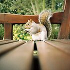Squirrel by dazb