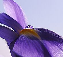 Iris Water Droplet by OpalFire