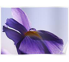 Iris Water Droplet Poster