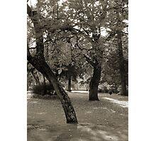 Inner City Parkland - Black & White Photographic Print