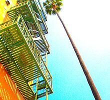 tall palm stree outside hollywood apartment by shannonybaloney