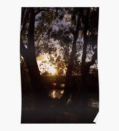Evening Rays Poster
