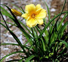 Peaceful Yellow by KrysM