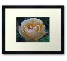 Summertime Lemon Rose Framed Print