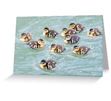 Mallard Chicks  Greeting Card