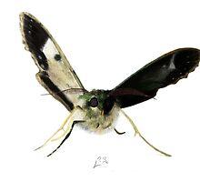 Wounded Moth by Arthropodart