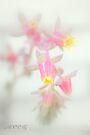Cacti flower by aMOONy