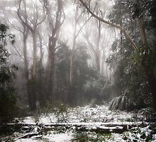 Snowy Forest by Cindy Lever