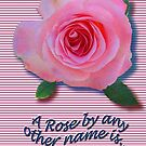 A Rose... by anyother name... * by DAdeSimone