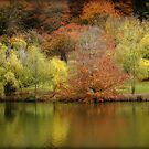 Autumn Reflections, Mount Lofty Botanic Gardens by Barb Leopold