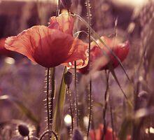 A Fine Romance... by DanielaVphotos