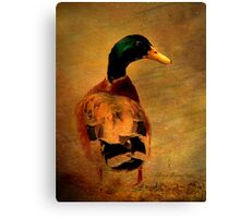 A duck ... Canvas Print