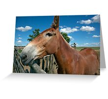 Mule From 1880 Town Greeting Card