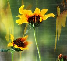 Sunflower Wilt by zzsuzsa