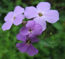 Purple Sweetness by MarianBendeth