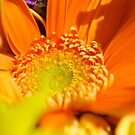 Diving Into Orange by artistjanebush