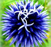 Blue Thistle by ©The Creative  Minds