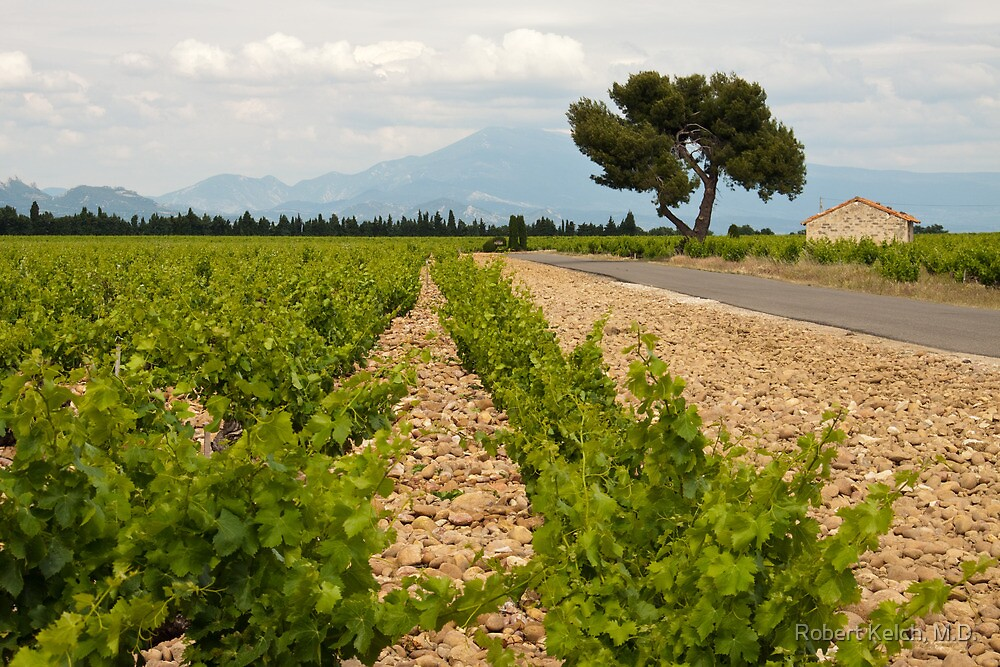 Chateauneuf du Pape vineyard and Mont Ventoux by Robert Kelch, M.D.