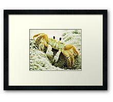 Beach Crabs Framed Print
