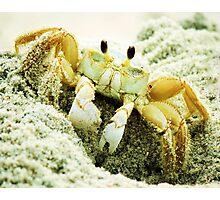 Beach Crabs Photographic Print