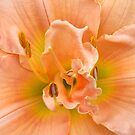 Sensuous & Sweet... by LindaR