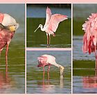 Got Pink ? by Karen  Moore