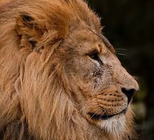 The King by Val Saxby