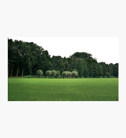Willows in Dutch landscape Photographic Print