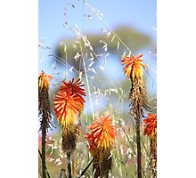 Red Hot at The Springs Photographic Print