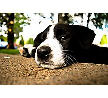 lazy pup Photographic Print