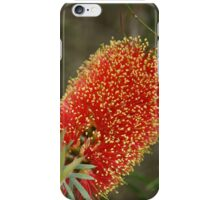 Calistemon- Red Bottle Brush flower iPhone Case/Skin